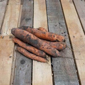 carotte non lavée bio