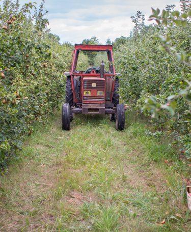 producteur - Livraison de fruits et légumes BIO - Graines d'ici - Nantes