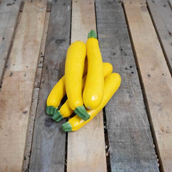 courgette jaune bio