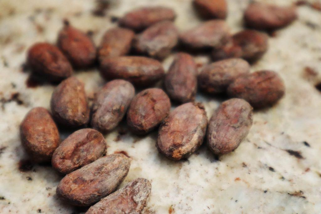 fève-cacao-Lattelier-bio-local