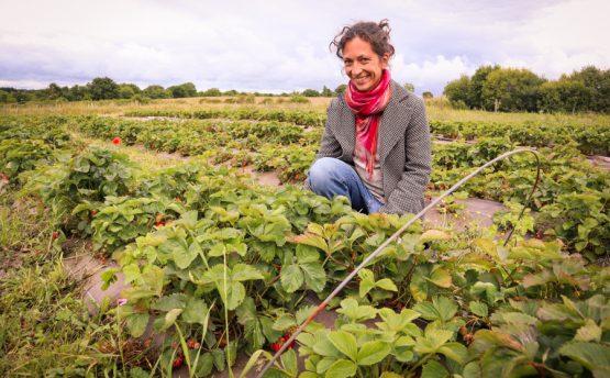 Les Cueillettes d'Annette - Livraison de fruits et légumes BIO - Graines d'ici - Nantes